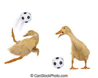 Ducks playing football on a white background
