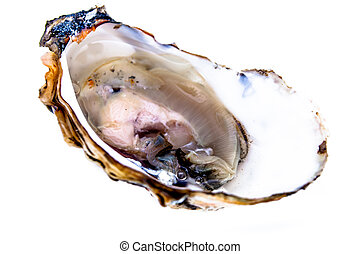 One oyster on a white background