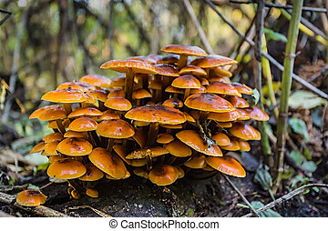 mushrooms in the forest glade