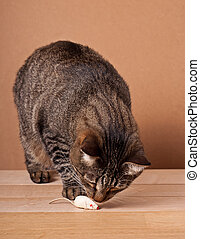 Cat and mouse - Cat hunts a mouse toy