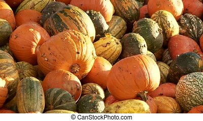over production of pumpkins - Video footage of a food over...