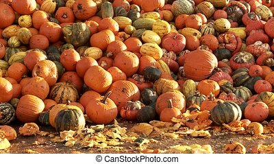 Pumpkins - Video footage of a food over production of...