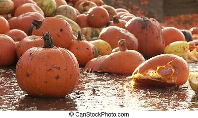 food over production of pumpkins - Video footage of a food...
