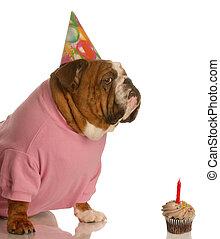 γενέθλια, σκύλοs