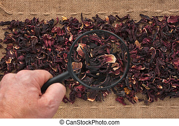 Man's hand with magnifying glass over hibiscus and burlap