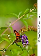 Summer Butterfly - Monarch Butterfly Vertical Photo