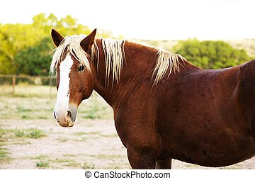Brown Horse - Farm: Brown Horse. Horses Photo Collection....