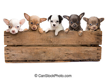 Crate full of dogs - Vintage wooden crate filled with five...