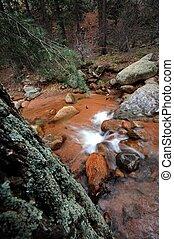 Forest Stream. Colorado Forest USA