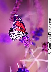 Monarch Butterfly Vertical Closeout Photography. The Monarch...