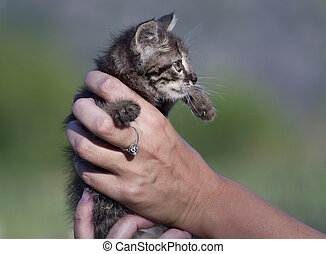 small cat in female hand