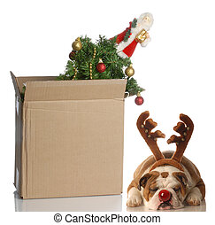 packing up christmas - christmas tree packed up in box with...