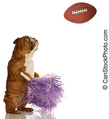football fan - english bulldog with pompoms cheering on...