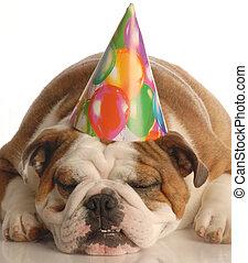 birthday dog - english bulldog wearing birthday party hat...