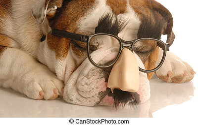 dog wearing groucho marx glasses - english bulldog wearing...