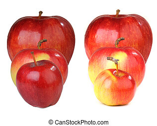 Apple red - Apple n a white background...