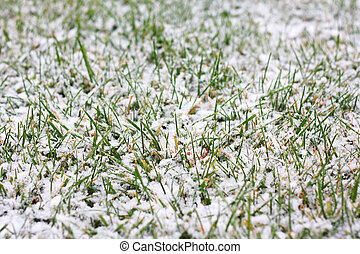 Frozen Grass in Winter Covered in Snow