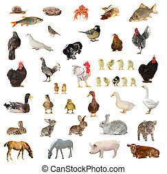 Birds and animals on a white background