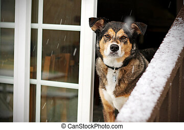 Dog Looking Out Door of House in Snow