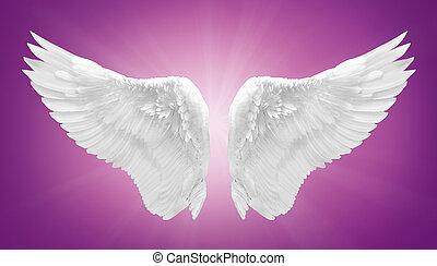 白色, 天使, 機翼, 被隔离