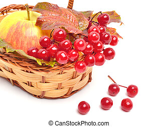 Red viburnum berries and ripe apple in the basket - Red...