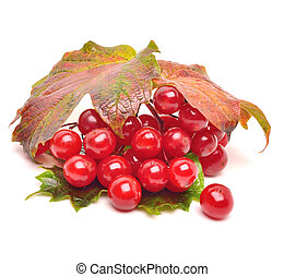 Red viburnum berries with leaves isolated on white