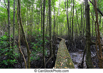 Wood path way among the Mangrove forest,