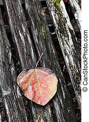 fall leaf - tree leaf on wooden surface