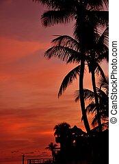 Exotic Background - Exotic Sunset Background. Florida Keys....