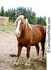 Brown Horse. American Farm.