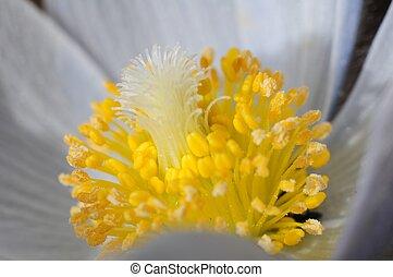 Wildflower Macro Photo. Colorado Mountains Flora
