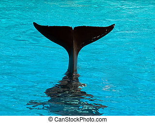 Killer whales tail - Tail of diving killer whale blue water...