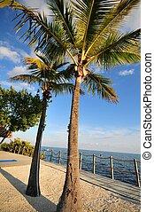 Florida Keys - Atlantic Ocean View. Vertical Photo