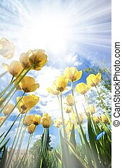 Tulips in the Sun - Yellow Tulips in the Sun Vertical Wide...