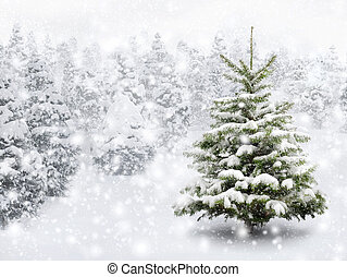 Fir tree in thick snow - Outdoor shot of a nice little fir...