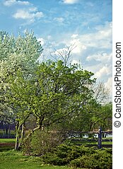 Flowering Trees - Spring in the Garden. Large Lake in the...