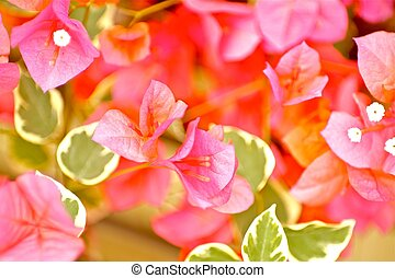 Pinky Plants -Flowers Horizontal Photography.