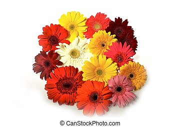 Colorful Gerberas Clipped Photo Gerberas Bouquet - White...