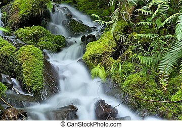 Mossy Rainforest Creek
