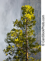 Solitaire Tree isolated in the foreground showing the spray...