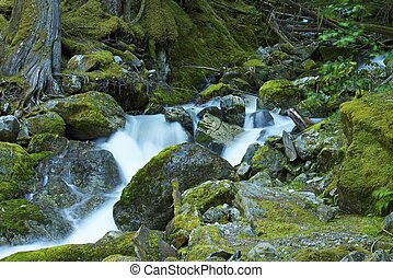 Mossy Mountain River