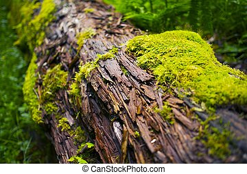 Mossy Log - Moss Closeup Rainforest Photo Collection