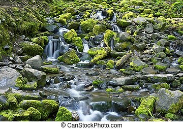 Rocky and Mossy Creek