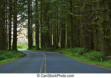 Forest Road - Washington Forest Road. Washington State Photo...