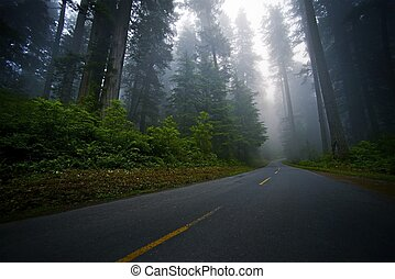 Mystic Forest Road