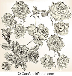 Collection of vector detailed roses
