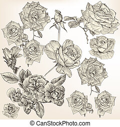 Collection of vector detailed roses flowers - Collection of...