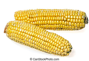 corn cobs - Two corn cobs isolated over white background