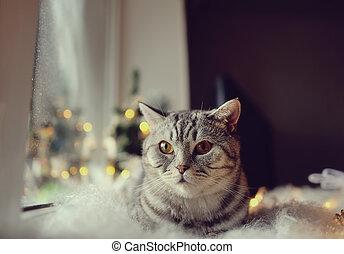 窗口, 冬天, 貓