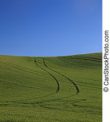 Rolling Green Wheat Fields With Blue Sky